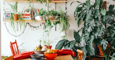 Нужны ли в квартире живые цветы